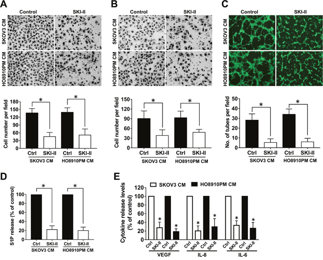 Effect of SphK inhibition by SKI-II on angiogenesis in vitro.