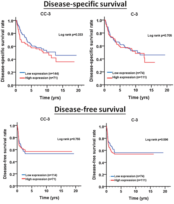 Oncotarget   Caspase-3 expression in tumorigenesis and