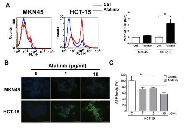 Afatinib causes cell apoptosis and mitochondrial toxicity in HER2-overexpressed CRC cells.