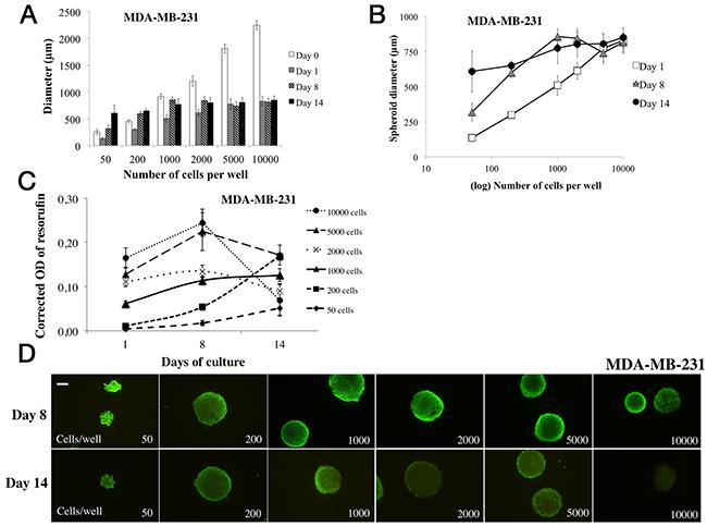 Parameter determination for MDA-MB-231 cell line spheroid formation.