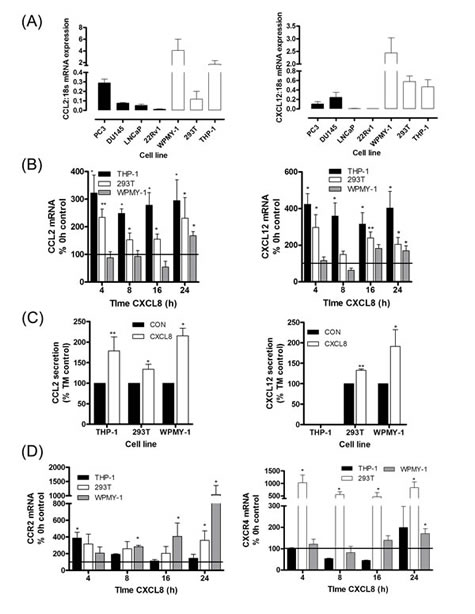 Paracrine CXCL8 signaling induces CCL2 and CXCL12 synthesis and secretion in stromal cells.