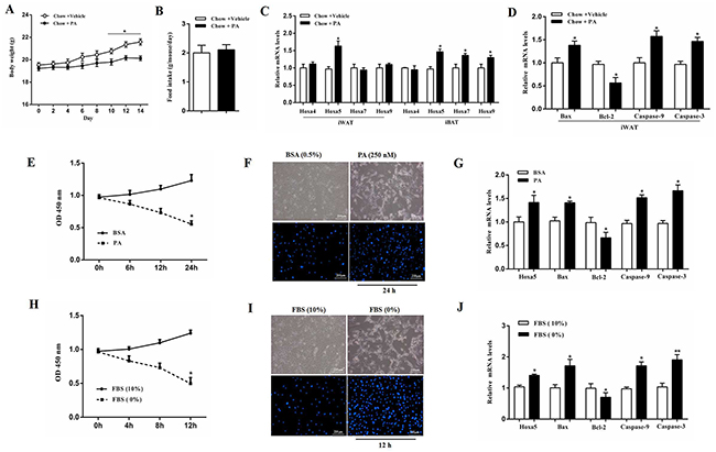 PA triggered apoptosis along with the increased Hoxa5 mRNA level in white adipose tissue of mice.
