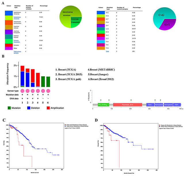 MMP1 genes expression and mutation analysis in breast invasive carcinoma (COSMIC and cBioPortal).