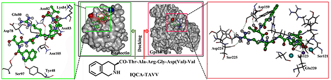 Docking features of IQCA-TAVV in the active site of P-selectin (green box) and GPIIb/IIIa (red box).