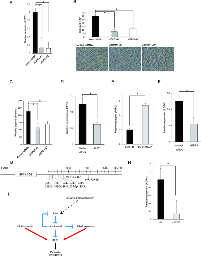 EVI1 regulates GPC1 expression in HPDE cell lines.