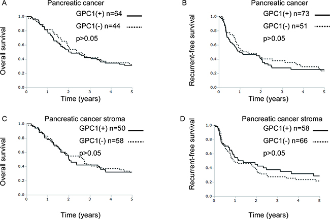 GPC1 protein expression is not correlated with overall survival or recurrence-free survival in pancreatic cancer patients.