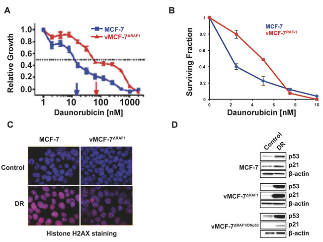Development of Chemoresistance in Breast Cancer Cells.
