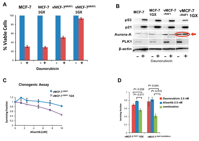 Aurora-A Kinase Activity is Required to Induce Chemoresistance.