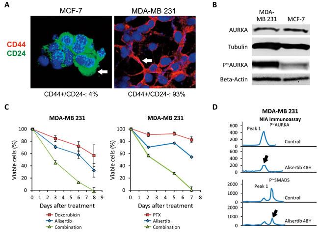 Pharmacologic Targeting of Aurora-A Restores Chemosensitivity.