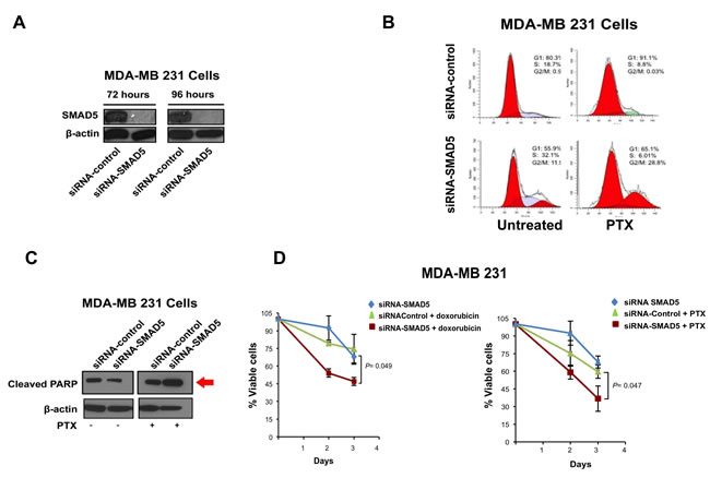 SMAD5 Expression is Required to Induce Chemoresistance.