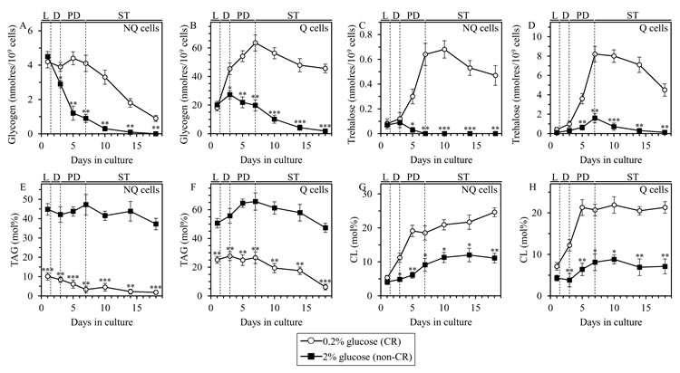 CR alters the abundance of glycogen, trehalose, triacylglycerols (TAG) and cardiolipins (CL) in Q and NQ cell populations through most of the chronological lifespan.