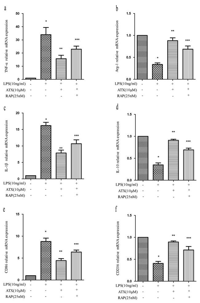 RAP inhibits ATX-induced M2 microglia polarization.