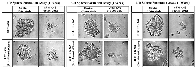 CFM-4.16 inhibits growth of RCC spheres derived from parental and Everolimus-resistant cells.