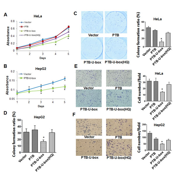 PTB-U-box inhibits cancer cell proliferation and invasion.
