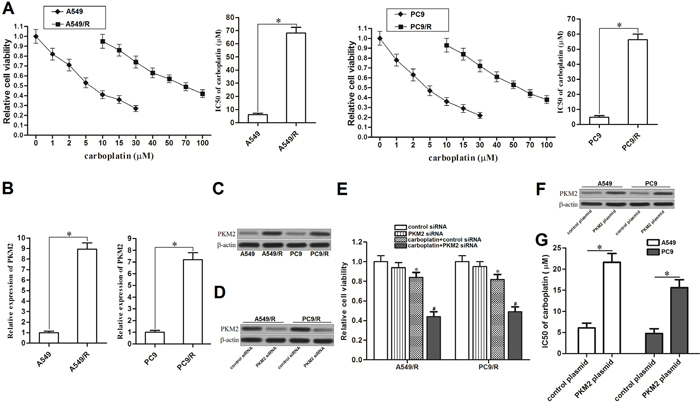 Overexpression of PKM2 induced resistance to carboplatin in NSCLC.