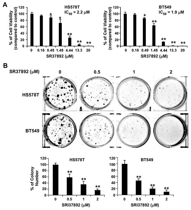 SRI37892 inhibits breast cancer cell viability and colony formation.