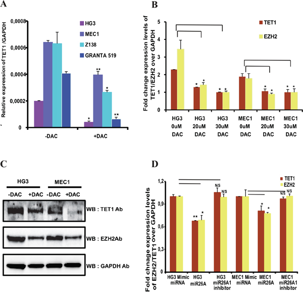 Expression of TET1 and EZH2 after DNA methyl inhibitor treatment and effect of miR26A1 overexpression.