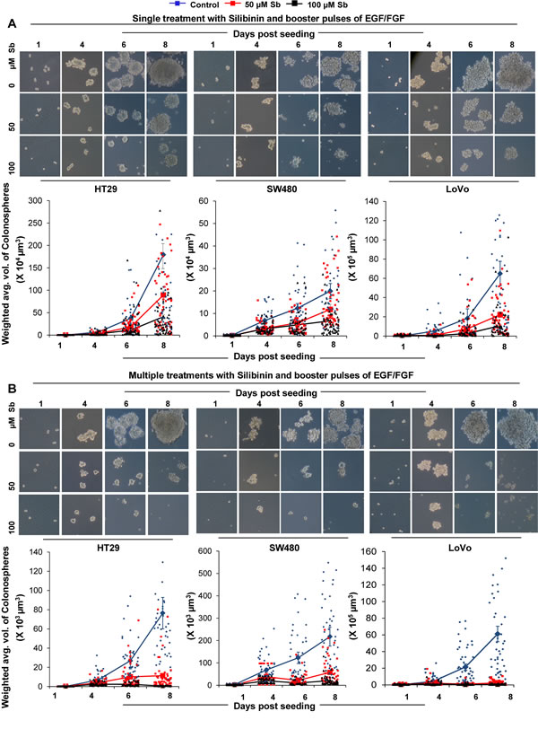 Effect of silibinin on the growth kinetics of CSC enriched colonospheres.