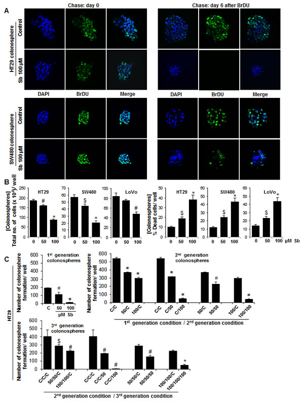 Effect of silibinin on the cycling properties of CSC and viability of CRC cells in the individual colonospheres.