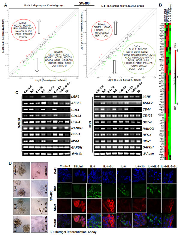 Effect of Silibinin on mRNA levels of CSC associated-transcription factors, signaling molecules, and markers in interleukin mediated CSC enriched colonospheres.