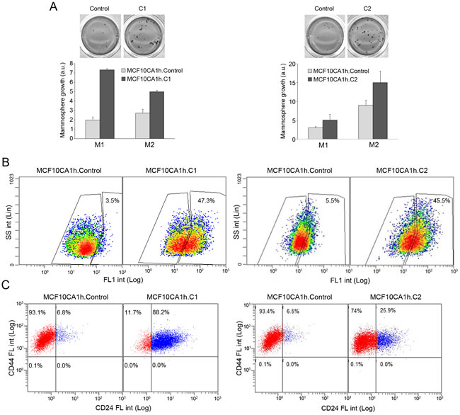 MiR-200s promote the mammosphere growth and ALDH activity of MCFCA1h cells.