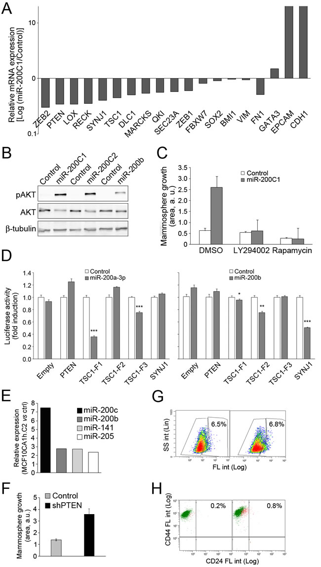Activation of the PI3K-Akt signaling pathway by expression of miR-200 in MCF10CA1h cells.
