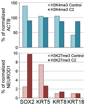 Chromatin immunoprecipitation to determine enrichment of histone markers H3K4me3 or H3K27me3 ChIP on promoter regions of SOX2, KRT5, KRT8 or KRT18 in control or miR-200 (Cluster 2)-expressing MCF10CA1h cells.