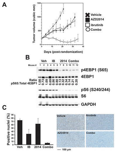 Combined inhibition of mTOR and BTK is effective