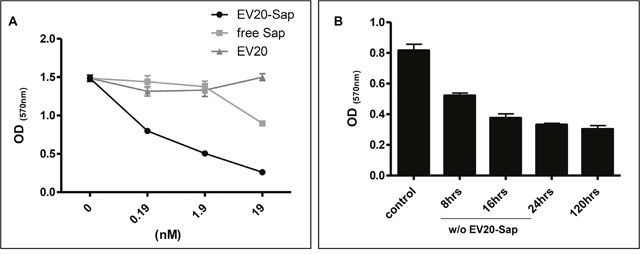 EV20-Sap but not naked EV20 or free Saporin demonstrates cell killing activity in melanoma cells.