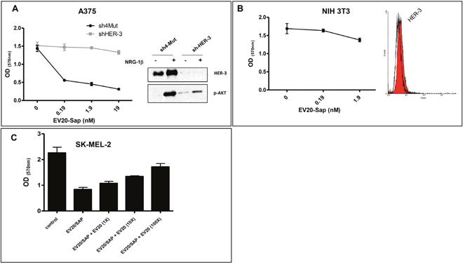 EV20-Sap antitumor activity is target-dependent.