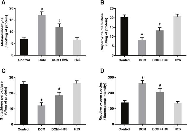 Measurements of oxidative stress in myocardium.