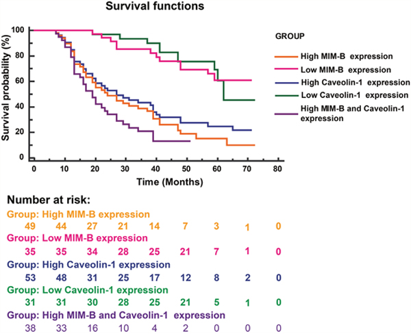 Kaplan-Meier survival plots for patients with different MIM-B and caveolin-1 expression levels.