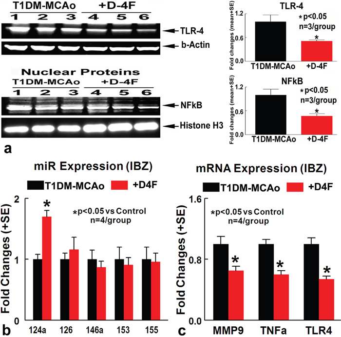 D-4F treatment of stroke in T1DM rats significantly decreases inflammatory factor expression and increases miR-124a expression.