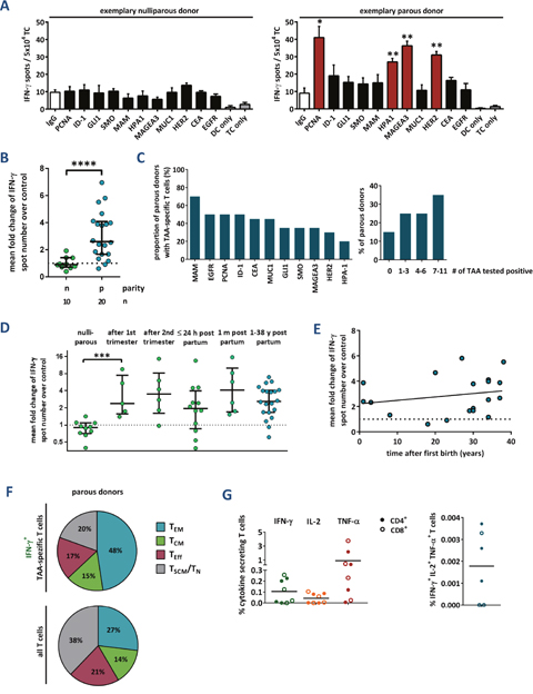 Tumor-associated antigen-reactive T cells are induced during pregnancy and persist for decades.