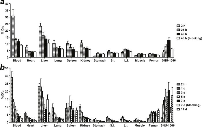 Biodistribution of 64Cu-PCTA-cetuximab and 177Lu-PCTA-cetuximab in SNU-1066 HNSCC xenograft model.