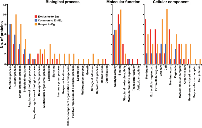 Classification of gene ontology of parasite proteins identified from E. multilocularis hydatid fluid (EmHF) and E. granulosus HF (EgHF).