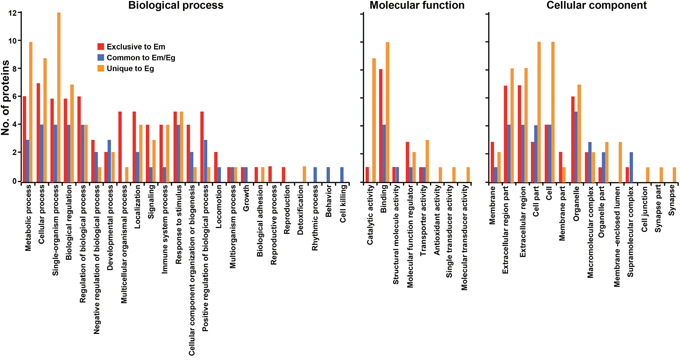 Analysis of gene ontology of host-derived proteins recognized in E. multilocularis hydatid fluid (EmHF) and E. granulosus HF (EgHF).