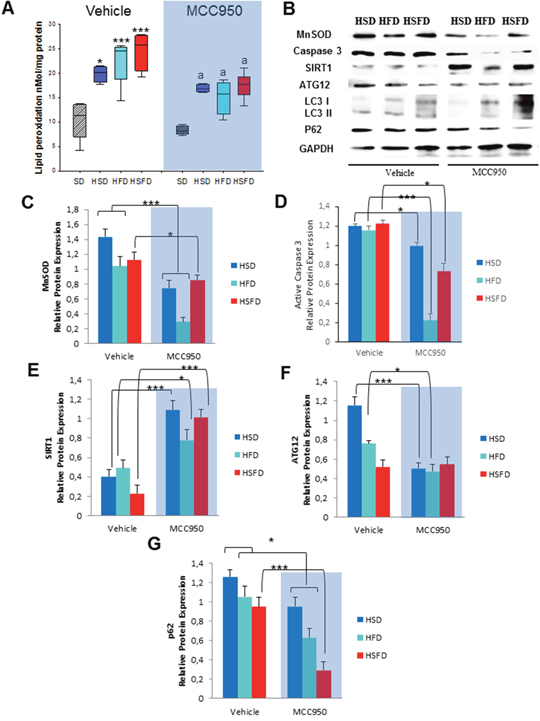 Changes in oxidative stress, apoptosis and autophagy in response to MCC950.