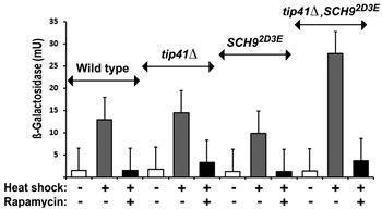 Fig 4: The rapamycin inhibition of HSE-