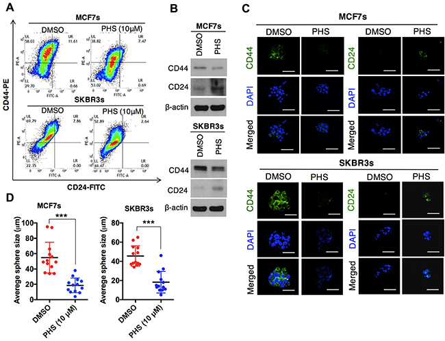 PHS suppresses the self-renewal ability of breast-like stem cell-populations.