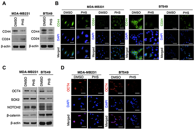 PHS blocks stem cell populations in basal-type breast cancer.