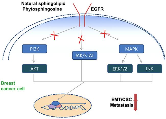 Schematic model of PHS against breast tumor malignancy.