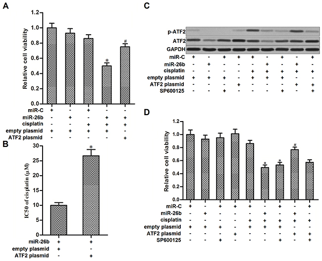 Overexpression of miR-26b sensitized Hep-2/R to cisplatin through inhibiting the phosphorylation of ATF2.