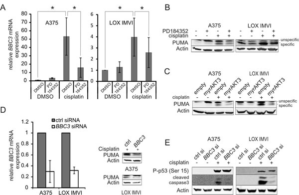 PUMA contributes to cisplatin induced apoptosis and is negatively regulated by PD-induced AKT.