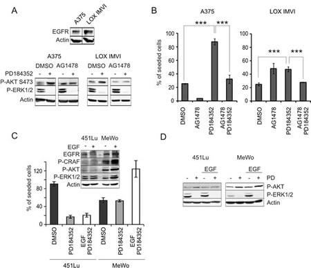 EGFR signaling is implicated in MEK inhibitor induced AKT activation.