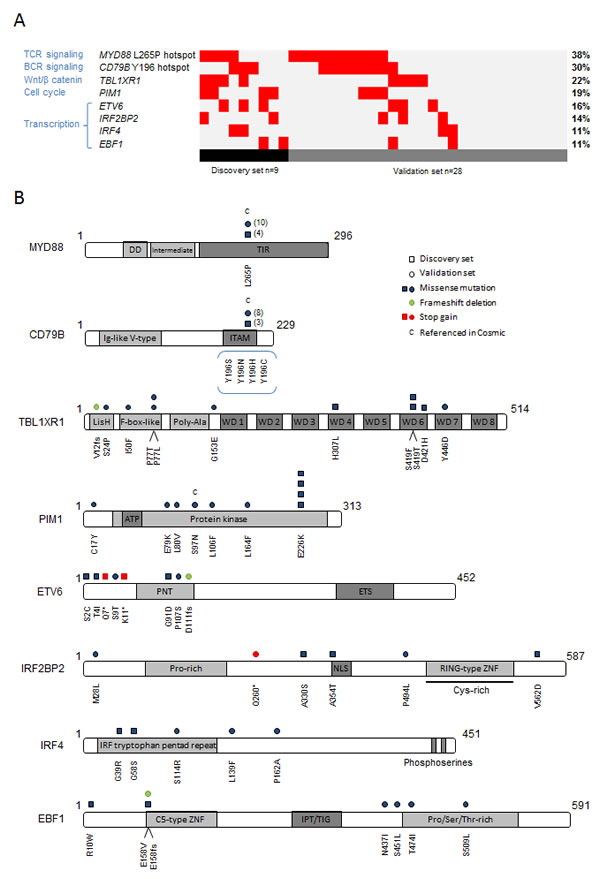 Investigation of 8 relevant genes recurrently affected by point mutations in PCNSL.
