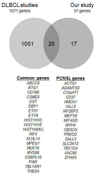 Overlaps in genes discovered in DLBCL studies and our 37 genes of interest.