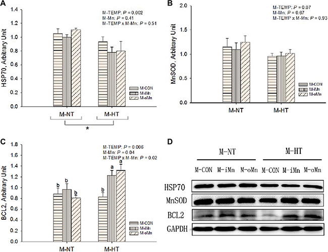 Effects of maternal environmental temperature and dietary Mn on HSP70 (A), MnSOD (B) and BCL2 (C) protein expressions in the embryonic heart.