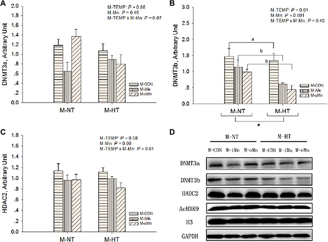 Effects of maternal environmental temperature and dietary Mn on epigenetic related protein expressions in the embryonic heart.