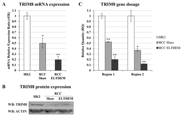 TRIM8 expression and gene dosage analysis in RCC cells.